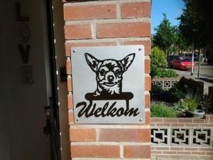 chihuahua + wekom